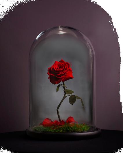 Картинки по запросу роза в колбе красавица и чудовище
